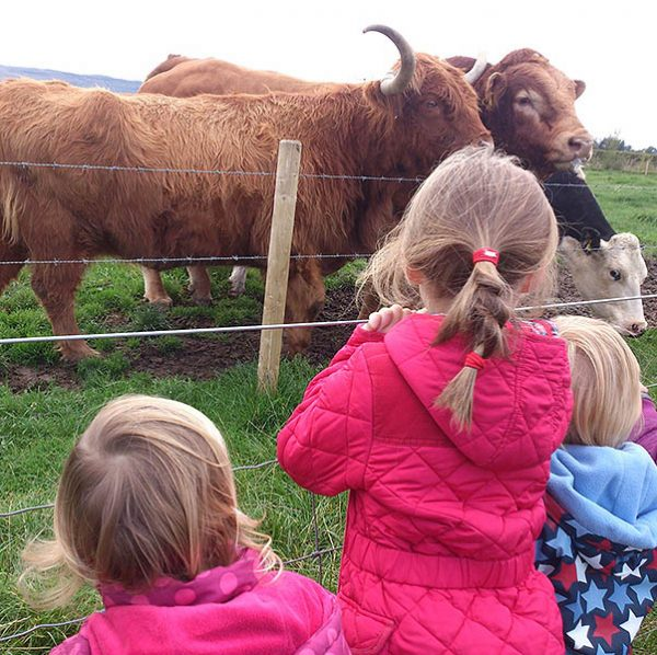Farm-Animal-Paddocks-sq