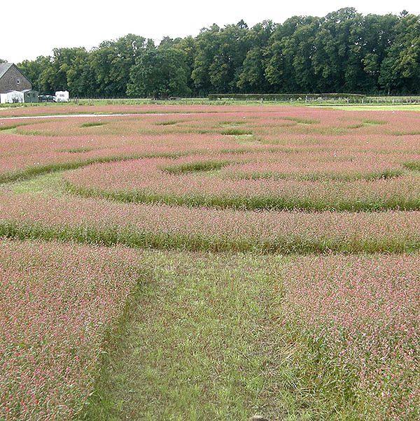 meadow-maze-sq